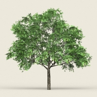 Game Ready Forest Tree 17 3D Model
