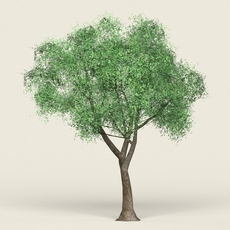 Game Ready Forest Tree 18 3D Model