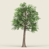16 58 56 886 game ready forest tree 19 02 4