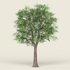 16 58 57 246 game ready forest tree 19 01 4