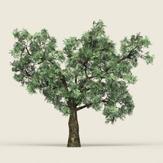 Game Ready Forest Tree 20 3D Model