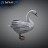 21 18 31 127 swan 12 4