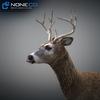 10 20 06 218 deer 01 4