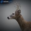 10 20 06 220 deer 03 4