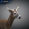 10 20 06 238 deer 02 4