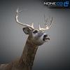 10 20 06 253 deer 06 4