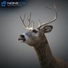 10 20 06 256 deer 05 4
