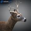 10 20 06 263 deer 04 4