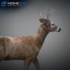 10 20 06 863 deer 08 4