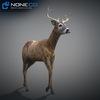 10 20 07 272 deer 12 4