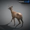 10 20 07 277 deer 13 4