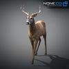 10 20 07 367 deer 16 4