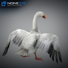 18 29 26 67 geese 030 4