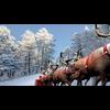 11 25 11 425 reindeer model 4