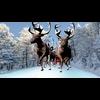 11 25 18 553 sant reindeer model 4