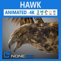 Hawk 3D Model