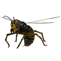 Wasp Rigged 3D Model