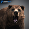 18 55 28 882 grizzlybear 002 4