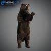 18 55 29 989 grizzlybear 007 4