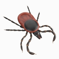 Tick rigged 3D Model