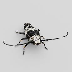 Longhorn beetle (Acanthoderes lacrymans) 3D Model