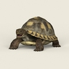 08 21 53 879 game ready tortoise 01 4