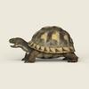 08 21 54 217 game ready tortoise 02 4