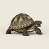08 21 54 469 game ready tortoise 05 4
