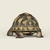 08 21 54 553 game ready tortoise 03 4