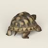 08 21 54 760 game ready tortoise 04 4