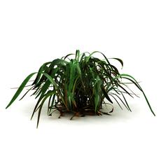 Marsh grass 3D Model
