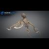 23 45 24 672 octopus 05 4