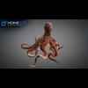 23 45 24 818 octopus 02 4