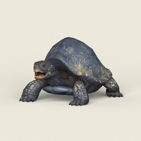 Game Ready Mountain Turtle 3D Model
