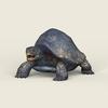 06 40 18 856 game ready mountain turtle 01 4