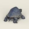 06 40 19 144 game ready mountain turtle 04 4