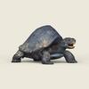 06 40 21 18 game ready mountain turtle 05 4