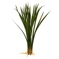 Marsh bulrush 3D Model