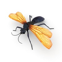 Tarantula hawk 3D Model