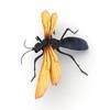 09 03 45 256 tarantulahawk r2 4