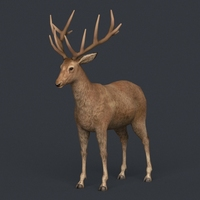 Game Ready Realistic Deer 3D Model
