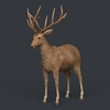 09 48 51 815 game ready realistic deer 01 4