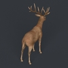 09 48 53 634 game ready realistic deer 04 4