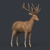 09 48 53 660 game ready realistic deer 05 4