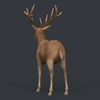 09 49 29 140 game ready realistic deer 03 4