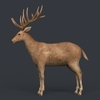 09 49 39 316 game ready realistic deer 02 4