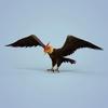 06 46 19 586 fantasy eagle 04 4