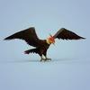 06 46 20 321 fantasy eagle 08 4
