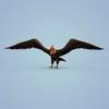 06 46 21 121 fantasy eagle 05 4
