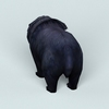 07 28 33 742 wild bear 03 4